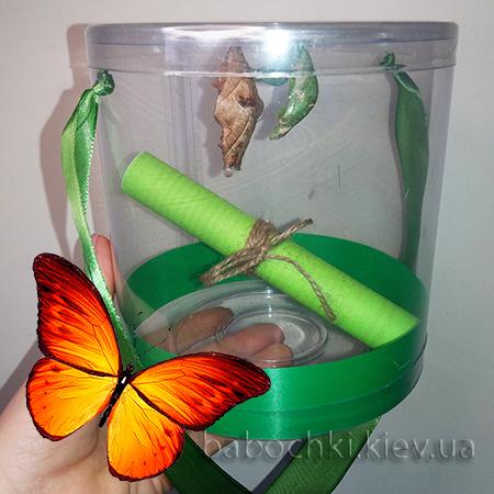 Домашняя ферма бабочек - выводи и радуйся.