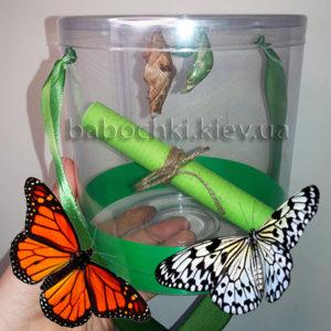 Бабочкарий - ферма живых бабочек.