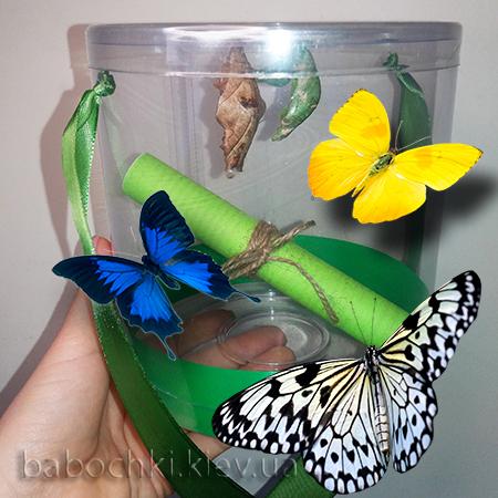 Набор куколок бабочек - шикарный подарок ребенку.