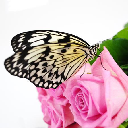 Бабочка живая Бумажный змей