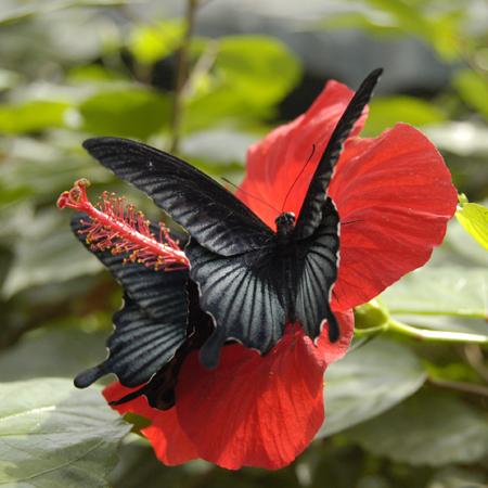 Заказ и доставка живых бабочек