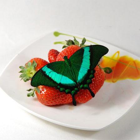 Павлин живая бабочка