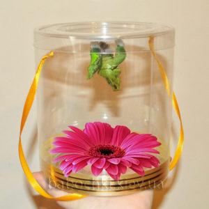 Бабочкарий с живой герберой