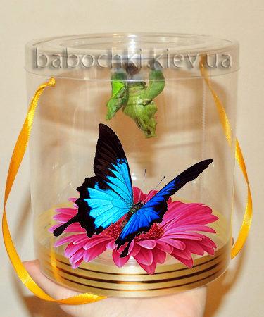 Подарить бабочкарий - ферму живых бабочек