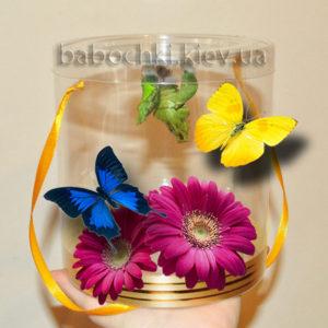 Бабочкарий - лучший подарок сюрприз на праздник.