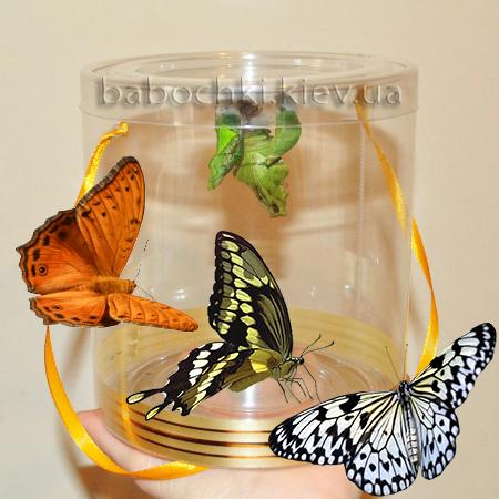 Ферма с живыми бабочками