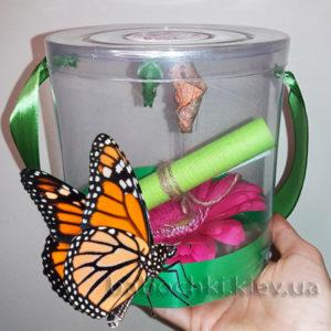 Купить домашнюю ферму бабочек