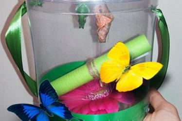 Домашняя ферма бабочек с цветами.