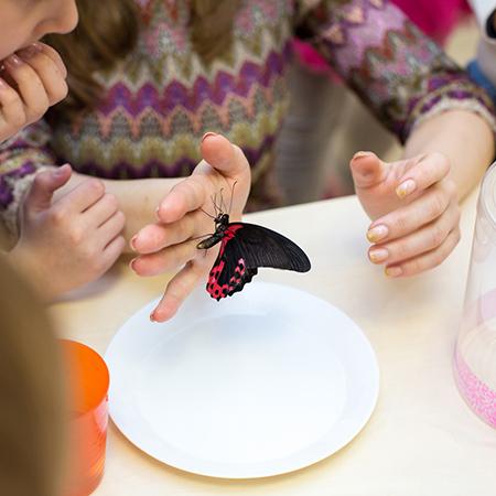 Дети знакомятся с миром природы, с миром живых тропических бабочек.