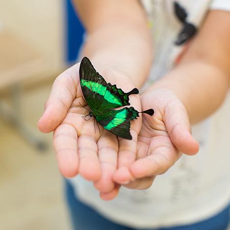 Дети учатся не бояться живых бабочек, любить и уважать природу.