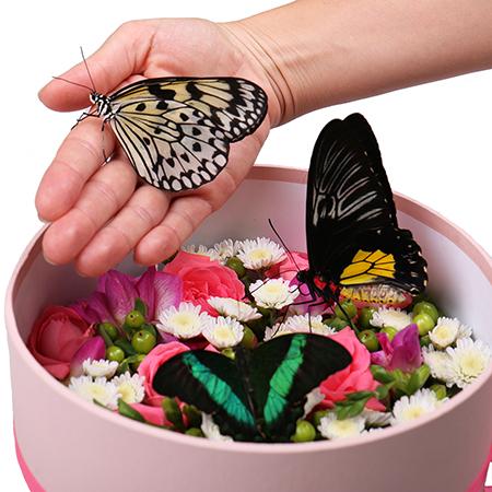 Живые бабочки с цветами в круглой коробке