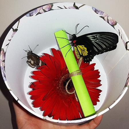 Живые бабочки с герберой в круглой коробке под крышкой.
