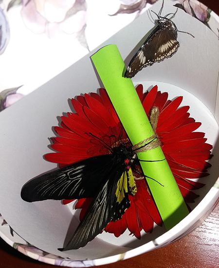 Коробка с бабочками