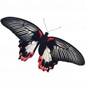 Крупные живые бабочки