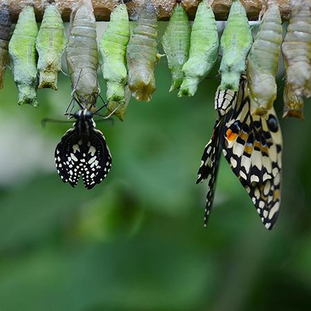 Выведение живых бабочек на ферме в Киеве.