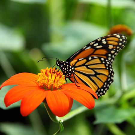 Живая бабочка для подарка девушке