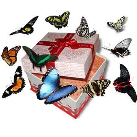 Настоящий салют из живых бабочек