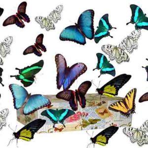 Салют из 15 живых бабочек