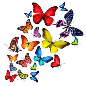 Салют из 17 живых бабочек