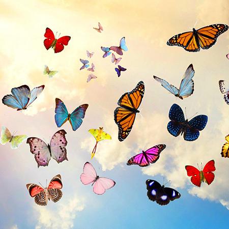 Салют из 20 живых бабочек