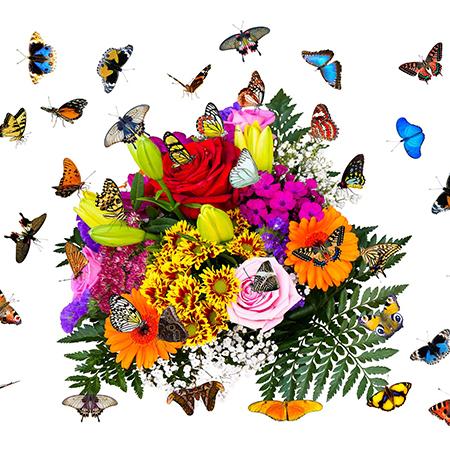 Салют из 25 живых бабочек