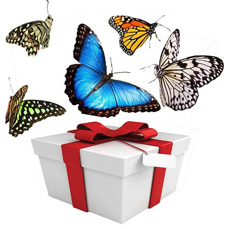 Салют из 5 живых бабочек