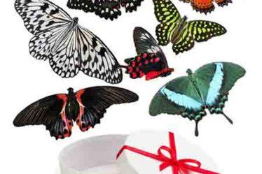 Салют живых бабочек из 7 шт.