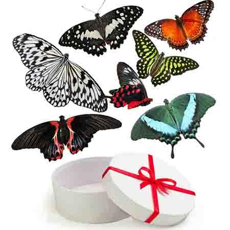 Салют из 7 живых бабочек
