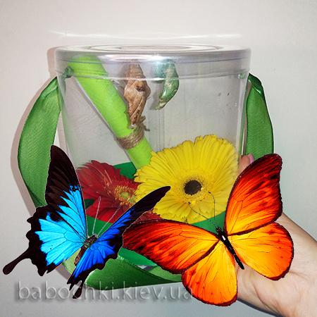 бабочкарий с живыми бабочками и цветком