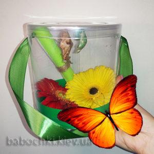 Ферма бабочек - бабочкарий купить в Киеве.