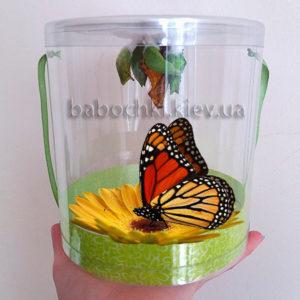 Бабочкарий - познавательный, развивающий подарок для Вашего ребенка