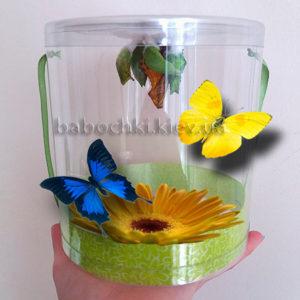Ферма живых бабочек в Киеве