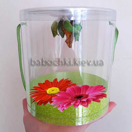 Бабочкарий - подарок для юного исследователя.