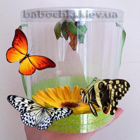 Ферма бабочек с доставкой по Украине.