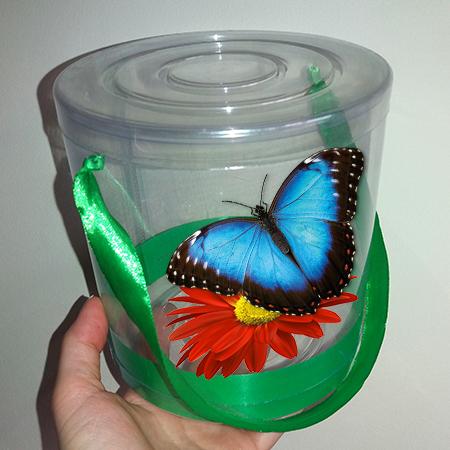 Живая бабочка Морфо в прозрачной коробочке с живым цветком