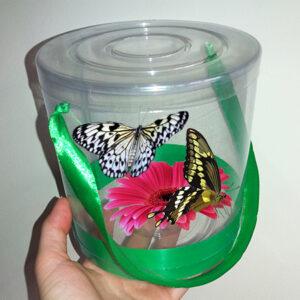 Живые бабочки в прозрачной упаковке
