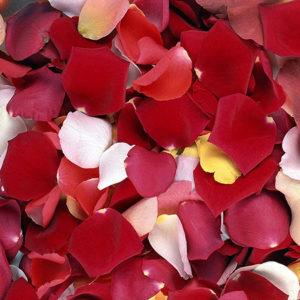 Ароматные лепестки роз свежих цветов