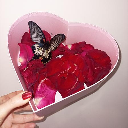 Коробка сердце с лепестками роз и живой бабочкой
